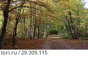 Купить «Листопад в осеннем лесу», видеоролик № 29309115, снято 13 октября 2018 г. (c) Яна Королёва / Фотобанк Лори