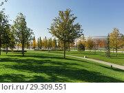 Купить «Зеленые газоны городского парка в солнечный осенний день», фото № 29309551, снято 19 октября 2018 г. (c) Наталья Гармашева / Фотобанк Лори