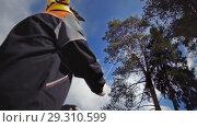 Купить «Arborist stretches rope to the top of the tree», видеоролик № 29310599, снято 20 марта 2019 г. (c) Даниил Хабаров / Фотобанк Лори