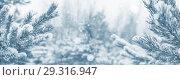 Купить «Фон с заснеженными хвойными ветками», фото № 29316947, снято 29 октября 2018 г. (c) Икан Леонид / Фотобанк Лори