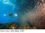 Купить «Clouds of Crab Larvae swirl near Shore, Gecarcoidea natalis, Christmas Island, Australia», фото № 29362747, снято 17 декабря 2018 г. (c) age Fotostock / Фотобанк Лори