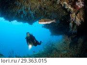 Купить «Scuba Diver exploring Overhang, Felidhu Atoll, Maldives», фото № 29363015, снято 16 декабря 2018 г. (c) age Fotostock / Фотобанк Лори