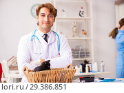 Купить «Doctor and assistant in vet clinic checking up kitten», фото № 29386851, снято 27 августа 2018 г. (c) Elnur / Фотобанк Лори