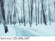 Купить «Winter landscape. Frosty trees along the winter park alley, winter snowy nature», фото № 29396347, снято 11 декабря 2017 г. (c) Зезелина Марина / Фотобанк Лори