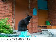 Купить «Черная кошка сидит перед крыльцом жилого дома и зевает», фото № 29400419, снято 26 июня 2018 г. (c) Pukhov K / Фотобанк Лори