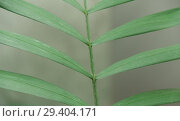 Green tropic leaves. Стоковое фото, фотограф Гужва / Фотобанк Лори