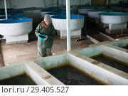 Купить «Female owner on sturgeon farm feeding fish», фото № 29405527, снято 4 февраля 2018 г. (c) Яков Филимонов / Фотобанк Лори