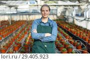 Купить «Young female gardener in apron standing near seedlings of oregano in pots in greenhouse», фото № 29405923, снято 3 октября 2018 г. (c) Яков Филимонов / Фотобанк Лори