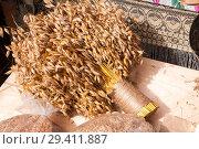 Купить «Oats, plant», фото № 29411887, снято 8 сентября 2018 г. (c) Катерина Белякина / Фотобанк Лори