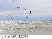 Купить «Чайки над морем», эксклюзивное фото № 29412079, снято 15 марта 2012 г. (c) Юрий Морозов / Фотобанк Лори