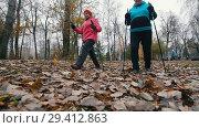 Купить «Two elderly women starts walking on sticks of nordic walking. Walking on a dead leaves», видеоролик № 29412863, снято 29 января 2020 г. (c) Константин Шишкин / Фотобанк Лори