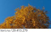 Купить «Autumn trees with yellowing leaves against the sky», видеоролик № 29413279, снято 29 сентября 2018 г. (c) Игорь Жоров / Фотобанк Лори