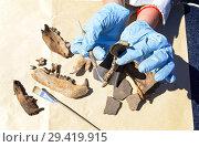 Купить «Археолог тщательно чистит скребком находку - часть медвежьей челюсти», фото № 29419915, снято 6 июля 2018 г. (c) Круглов Олег / Фотобанк Лори
