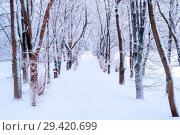 Купить «Winter landscape. Snowy trees along the winter park alley. Winter snowy cloudy scene», фото № 29420699, снято 11 декабря 2017 г. (c) Зезелина Марина / Фотобанк Лори