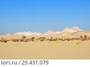 Купить «Landscape of the Western desert Sahara, Egypt», фото № 29431079, снято 26 декабря 2008 г. (c) Знаменский Олег / Фотобанк Лори