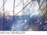 Купить «blur winter background with snow on branches», фото № 29432231, снято 7 февраля 2018 г. (c) katalinks / Фотобанк Лори