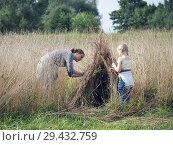 Купить «Children build a hut of ripe wheat ears», фото № 29432759, снято 16 ноября 2018 г. (c) Ирина Козорог / Фотобанк Лори