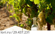 Two wineglasses of white wine with baguette, various types of cheese on vineyard background. Стоковое видео, видеограф Яков Филимонов / Фотобанк Лори