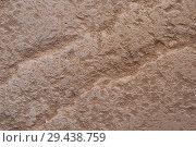 Купить «Surface texture of the limestone», фото № 29438759, снято 9 августа 2018 г. (c) Pavel Biryukov / Фотобанк Лори