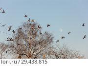 Купить «Large flock of pigeons», фото № 29438815, снято 3 февраля 2012 г. (c) Argument / Фотобанк Лори