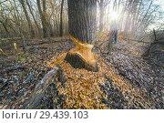 Купить «A man studies the activities of the Beavers.», фото № 29439103, снято 11 ноября 2017 г. (c) Акиньшин Владимир / Фотобанк Лори