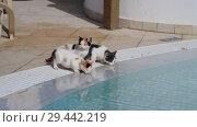 Купить «Kittens drink water from the pool outside», видеоролик № 29442219, снято 3 ноября 2018 г. (c) Володина Ольга / Фотобанк Лори