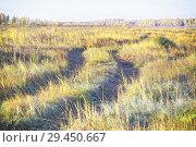 Купить «A single track in a yellow autumn field, as background», фото № 29450667, снято 27 сентября 2018 г. (c) Круглов Олег / Фотобанк Лори