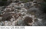 Купить «Dry grass on stony ground on the island of Cyprus», видеоролик № 29456095, снято 5 ноября 2018 г. (c) Володина Ольга / Фотобанк Лори