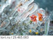 Аленький цветочек в ноябре. Стоковое фото, фотограф Владимир Судник / Фотобанк Лори