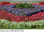 Купить «Красивая клумба из разноцветных цветов», фото № 29474723, снято 14 августа 2018 г. (c) Елена Коромыслова / Фотобанк Лори