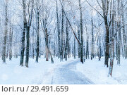 Купить «Winter landscape. Snowy trees in the winter park alley, winter snowy landscape view», фото № 29491659, снято 11 декабря 2017 г. (c) Зезелина Марина / Фотобанк Лори
