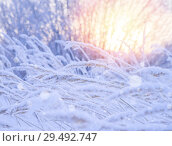 Купить «Winter landscape with snow-covered reeds in the sun», фото № 29492747, снято 26 ноября 2018 г. (c) Икан Леонид / Фотобанк Лори