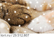 Купить «close up of paws of two cats on blanket over snow», фото № 29512807, снято 15 ноября 2017 г. (c) Syda Productions / Фотобанк Лори