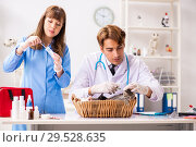 Купить «Doctor and assistant in vet clinic checking up kitten», фото № 29528635, снято 27 августа 2018 г. (c) Elnur / Фотобанк Лори