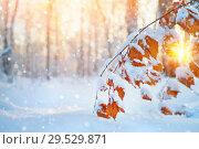 Купить «Branch of birch with yellow leaves covered with snow», фото № 29529871, снято 4 декабря 2018 г. (c) Икан Леонид / Фотобанк Лори