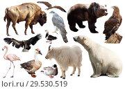 Купить «Set of fauna of North American animals.», фото № 29530519, снято 24 марта 2019 г. (c) Яков Филимонов / Фотобанк Лори