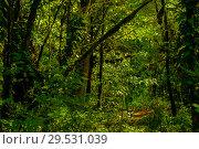 Купить «Background - subtropical forest, yew-boxwood grove with mossy tree trunks», фото № 29531039, снято 25 сентября 2017 г. (c) Евгений Харитонов / Фотобанк Лори