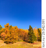 Купить «Autumn trees leaves multicolored», фото № 29542091, снято 12 октября 2018 г. (c) Дмитрий Брусков / Фотобанк Лори