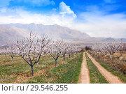 Купить «Apricot farm during sping season against Vayk mountain range, Vayots Dzor Province», фото № 29546255, снято 16 марта 2018 г. (c) Papoyan Irina / Фотобанк Лори