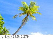 Купить «palm trees over blue sky», фото № 29546279, снято 21 февраля 2018 г. (c) Syda Productions / Фотобанк Лори
