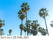 Купить «palm trees over sky at venice beach, california», фото № 29546283, снято 26 февраля 2018 г. (c) Syda Productions / Фотобанк Лори