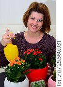 Купить «The Woman watering potted flowers Kalanchoe indoors», фото № 29560931, снято 20 ноября 2017 г. (c) Володина Ольга / Фотобанк Лори