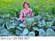 Купить «Woman sitting on cabbage field in summer», фото № 29560967, снято 17 июля 2017 г. (c) Володина Ольга / Фотобанк Лори