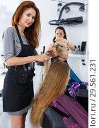 Купить «Hairdresser doing styling of girl», фото № 29561231, снято 26 июня 2018 г. (c) Яков Филимонов / Фотобанк Лори