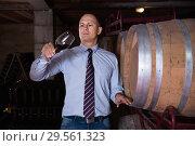 Купить «Confident male winemaker degusting red wine in wine cellar near bottles racks», фото № 29561323, снято 22 января 2018 г. (c) Яков Филимонов / Фотобанк Лори