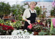 Купить «Portrait of female gardener with blooming flower who is taking care of them», фото № 29564359, снято 23 февраля 2018 г. (c) Яков Филимонов / Фотобанк Лори
