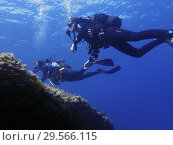 Купить «Diving in Arch area, Formentera, Balearic Islands, Mediterranean Sea, Spain. The Arch offers a rich, recreational seascape. It is an ideal dive site to...», фото № 29566115, снято 3 июня 2018 г. (c) age Fotostock / Фотобанк Лори