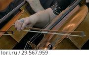 Woman playing cello. Стоковое видео, видеограф Aleksey Popov / Фотобанк Лори