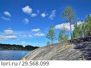 Купить «Karelian landscape - rocks, pine trees and water. Bay Chupa, White Sea, Karelia, Russia», фото № 29568099, снято 10 августа 2018 г. (c) Сергей Трофименко / Фотобанк Лори