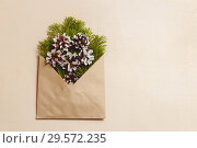 Top view green fir tree branches and cones in brown craft envelope on brown color wood background. Стоковое фото, фотограф Максим Бейков / Фотобанк Лори